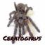 Ceratogyrus